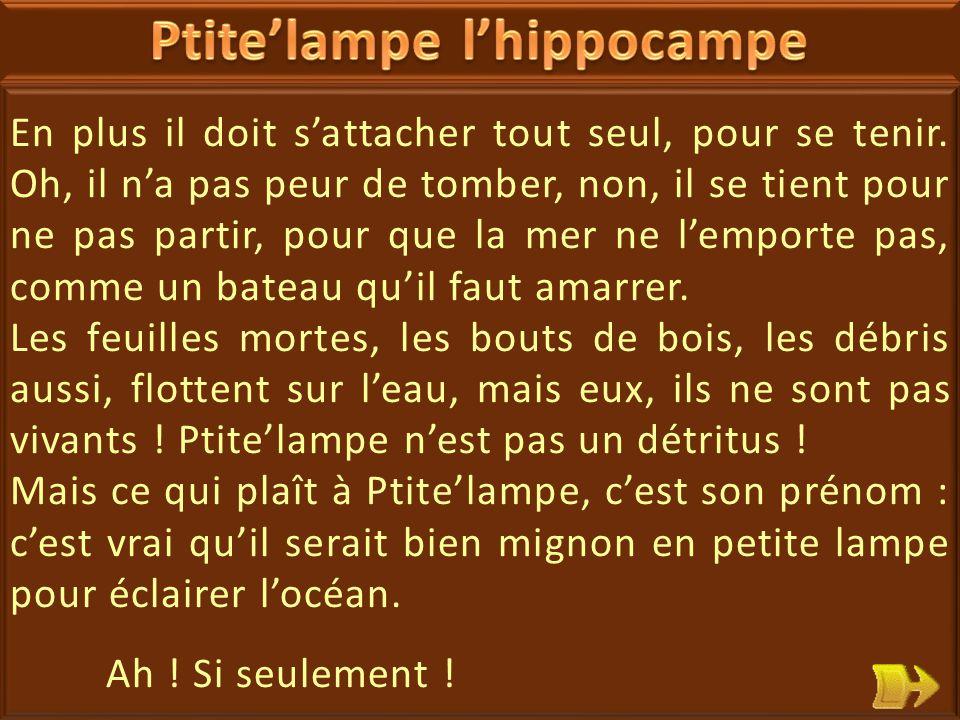 03 Ptite'lampe l'hippocampe se plaint : quand il veut dormir, ou rester tranquille, il doit s'accrocher à une algue par la queue.