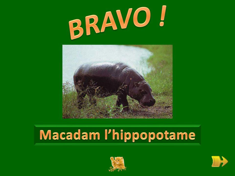 Q Qui est Macadam . ok 1 1 Pourquoi n'est-il pas heureux .