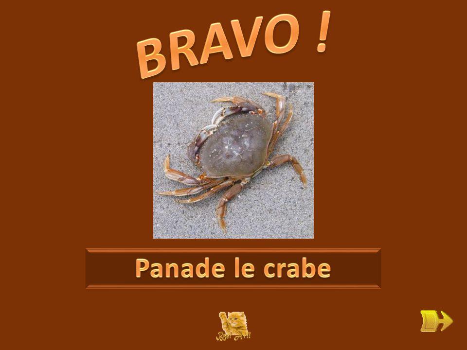 Q Qui est Panade . ok 1 1 Que signifie « il revendique » .