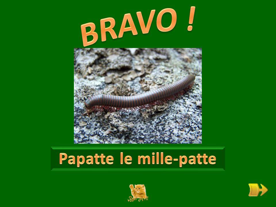 Q Qui est Papatte . ok 1 1 Pourquoi est-il grincheux .