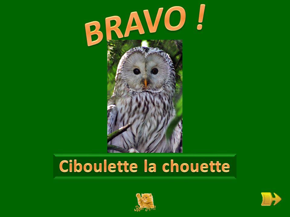 Q Qui est Ciboulette . ok 1 1 Pourquoi est-elle tristounette .