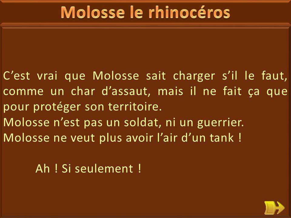 13 Molosse le rhinocéros est grognon.