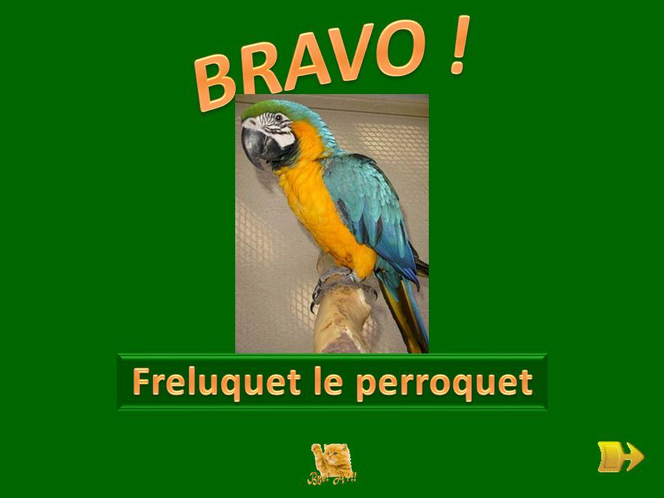 Q Qui est Freluquet . ok 1 1 Que sait-il faire . ok 2 2 Où vit-il .