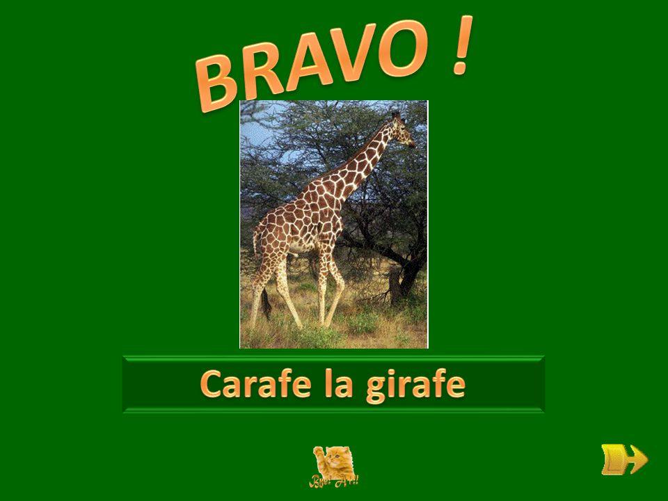 Q Que souhaite Carafe la girafe . ok 1 1 Pourquoi son long cou la gêne-t-il .