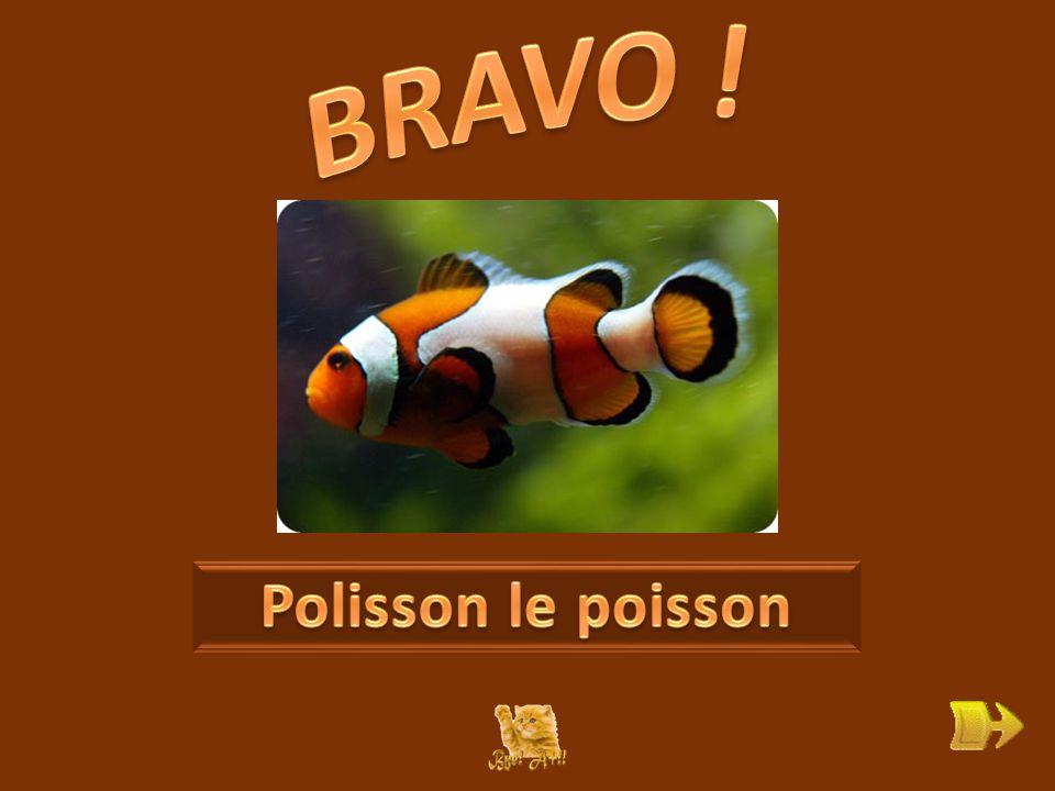 Q Qui est Polisson, que veut-il . ok 1 1 Que sait-il faire .