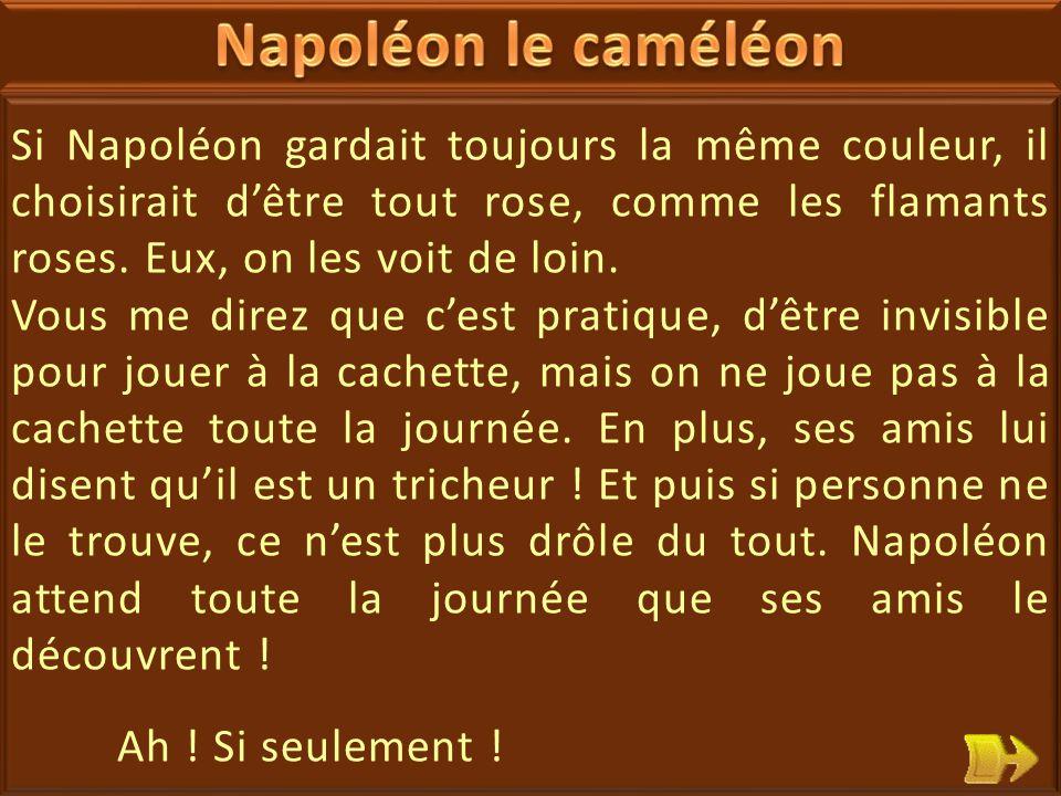 19 Napoléon est malheureux : c'est un caméléon qui, pour se camoufler change de couleur : il adopte la couleur du sol, des branches, des feuilles.