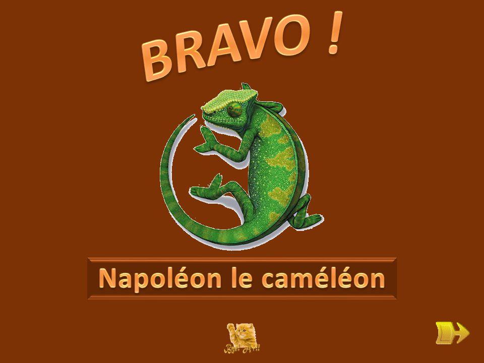 Q Comment s'appelle le caméléon . ok 1 1 Que sait-il faire pour échapper à ses ennemis .