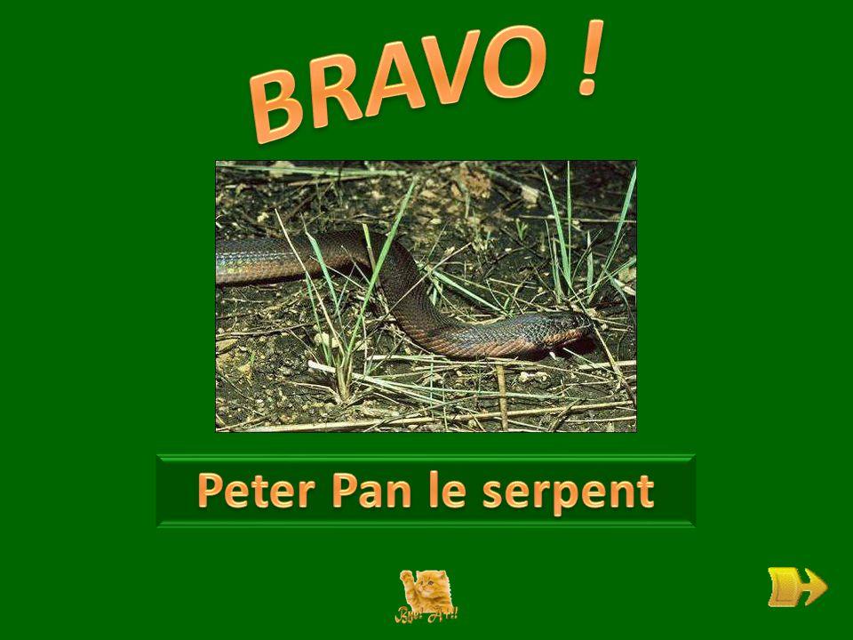 Q A quoi rêve Peter Pan . ok 1 1 Trouves-tu que son nom lui aille bien .