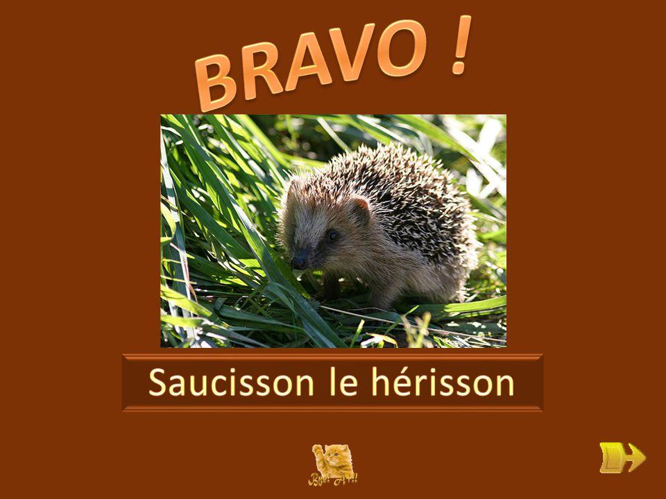 Q Qui est Saucisson . ok 1 1 Que pense-t-il au début de l'histoire .