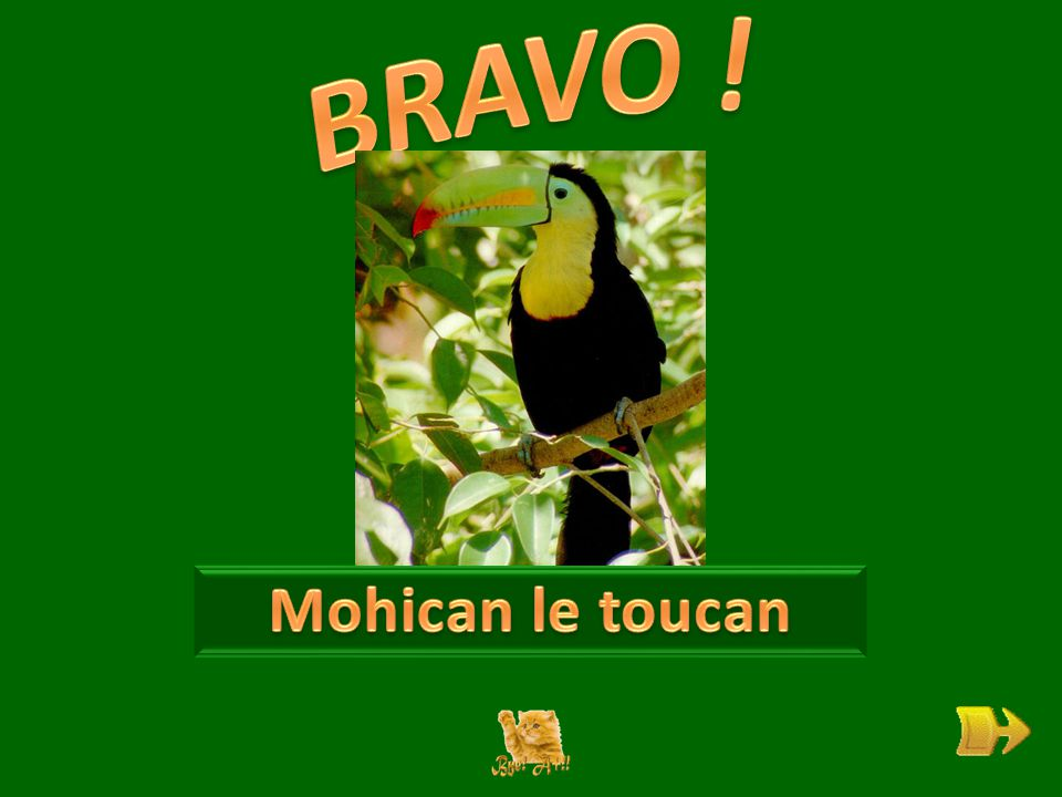 Q Qui est Mohican . ok 1 1 A quoi rêve-t-il . ok 2 2 Comment est son bec .