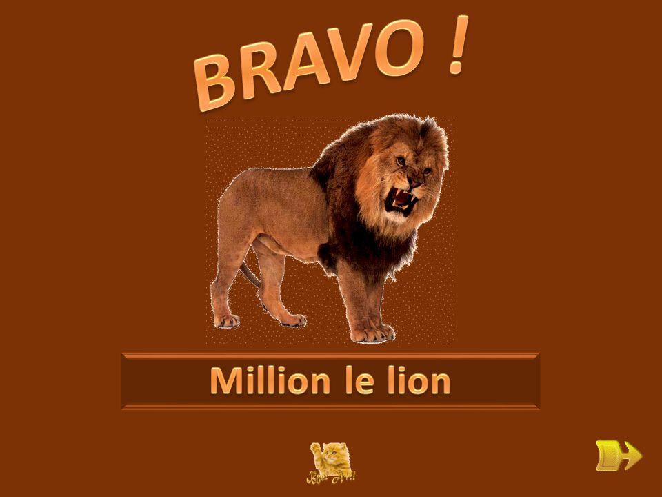 Q Comment s'appelle le lion . ok 1 1 Que veut dire « carnivore » .
