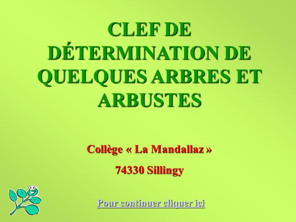 CLEF DE DÉTERMINATION DE QUELQUES ARBRES ET ARBUSTES Collège « La Mandallaz » 74330 Sillingy Pour continuer cliquer ici Pour continuer cliquer ici