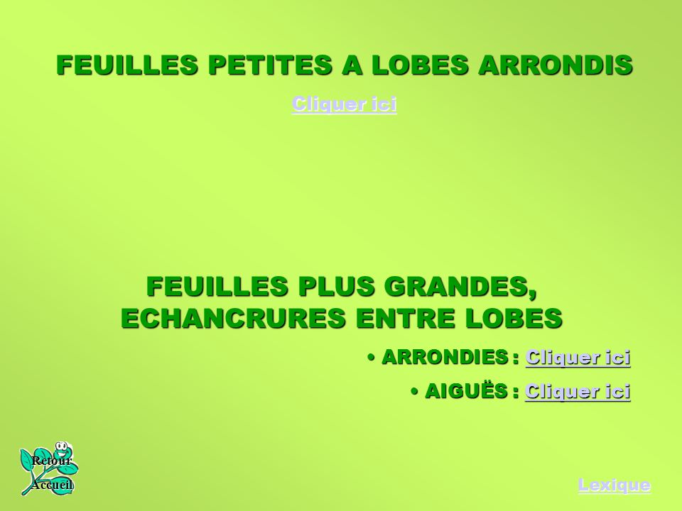 Lexique FEUILLES PETITES A LOBES ARRONDIS Cliquer ici Cliquer ici FEUILLES PLUS GRANDES, ECHANCRURES ENTRE LOBES ARRONDIES : Cliquer ici ARRONDIES : C
