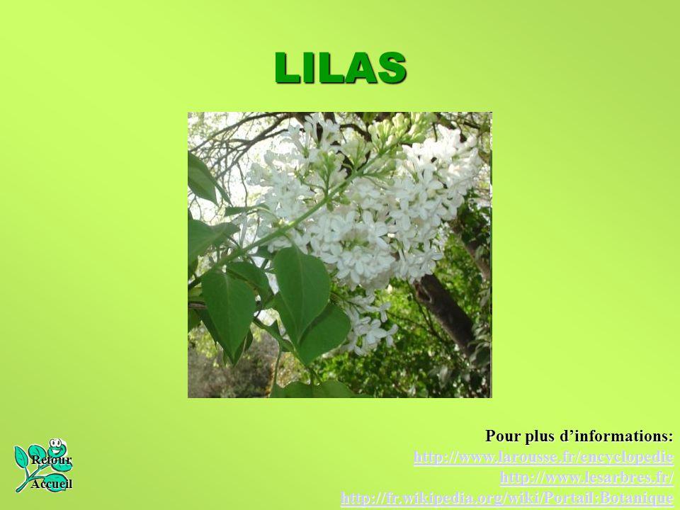 LILAS Retour Accueil Pour plus d'informations: http://www.larousse.fr/encyclopedie http://www.lesarbres.fr/ http://fr.wikipedia.org/wiki/Portail:Botan