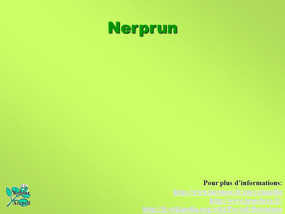 Nerprun Retour Accueil Pour plus d'informations: http://www.larousse.fr/encyclopedie http://www.lesarbres.fr/ http://fr.wikipedia.org/wiki/Portail:Bot