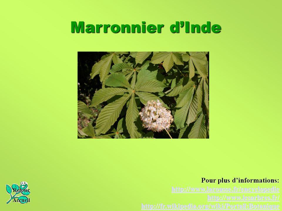 Marronnier d'Inde Retour Accueil Pour plus d'informations: http://www.larousse.fr/encyclopedie http://www.lesarbres.fr/ http://fr.wikipedia.org/wiki/P