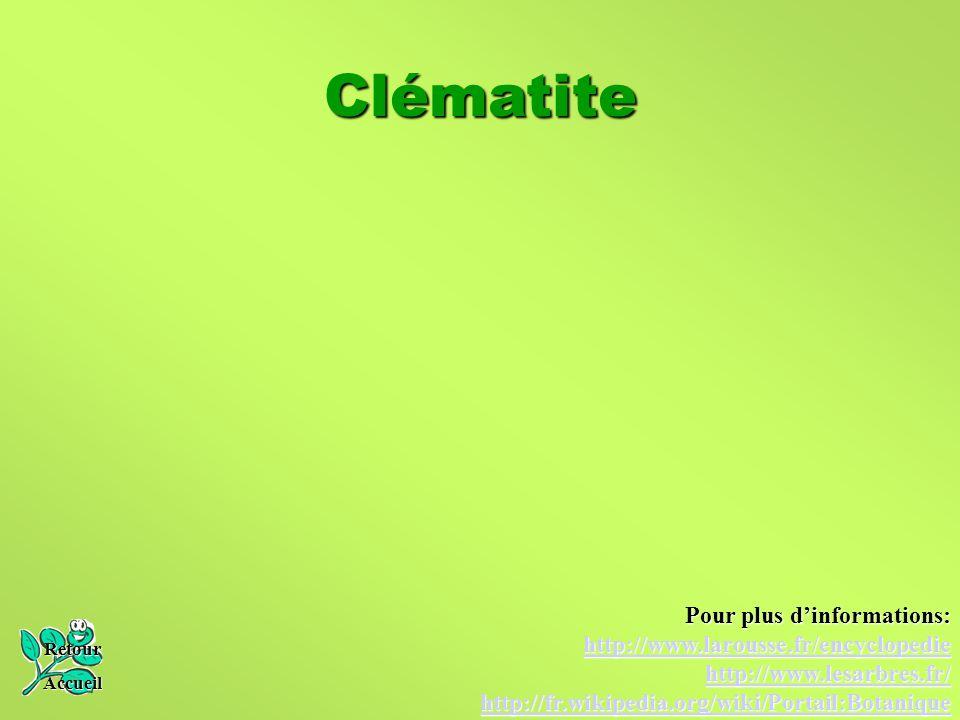 Clématite Retour Accueil Pour plus d'informations: http://www.larousse.fr/encyclopedie http://www.lesarbres.fr/ http://fr.wikipedia.org/wiki/Portail:B