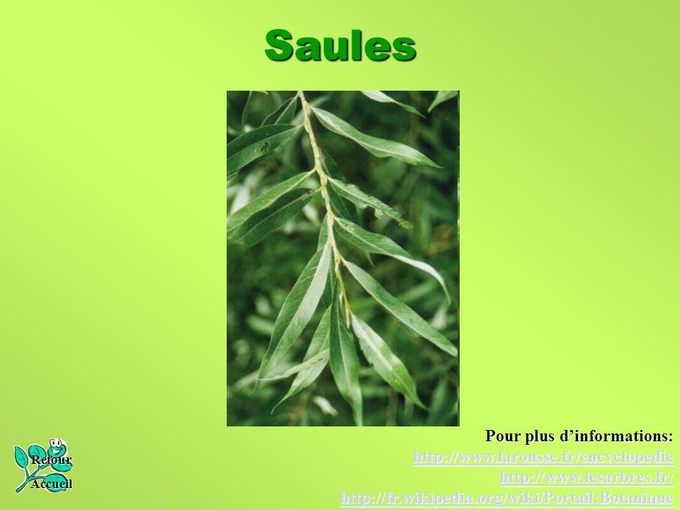 Saules Retour Accueil Pour plus d'informations: http://www.larousse.fr/encyclopedie http://www.lesarbres.fr/ http://fr.wikipedia.org/wiki/Portail:Bota