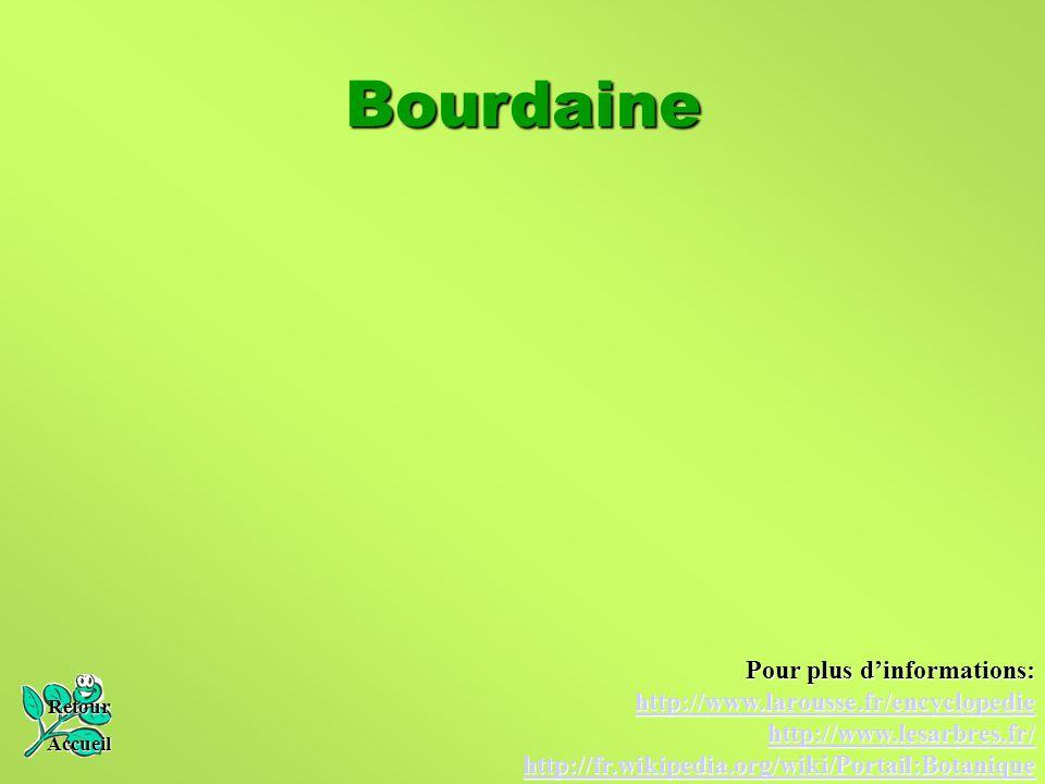 Bourdaine Retour Accueil Pour plus d'informations: http://www.larousse.fr/encyclopedie http://www.lesarbres.fr/ http://fr.wikipedia.org/wiki/Portail:B