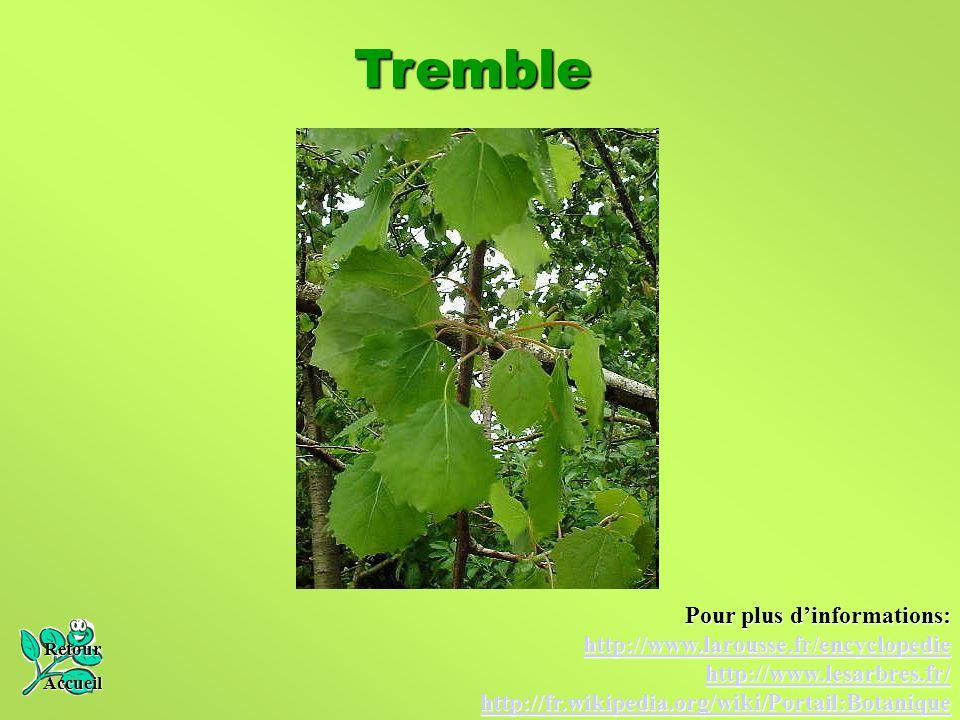Tremble Retour Accueil Pour plus d'informations: http://www.larousse.fr/encyclopedie http://www.lesarbres.fr/ http://fr.wikipedia.org/wiki/Portail:Bot