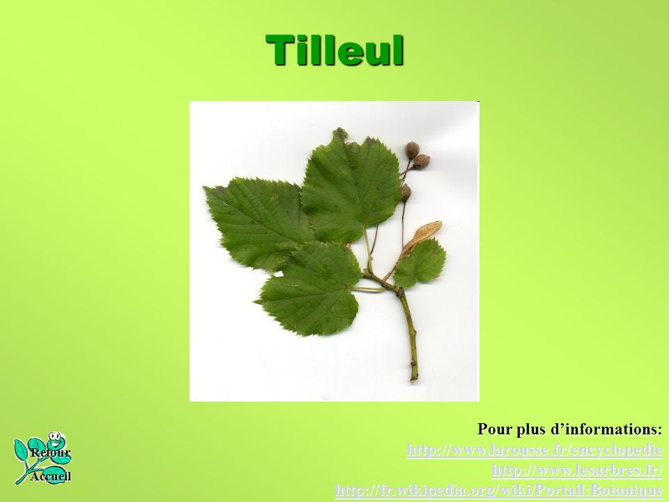 Tilleul Retour Accueil Pour plus d'informations: http://www.larousse.fr/encyclopedie http://www.lesarbres.fr/ http://fr.wikipedia.org/wiki/Portail:Bot