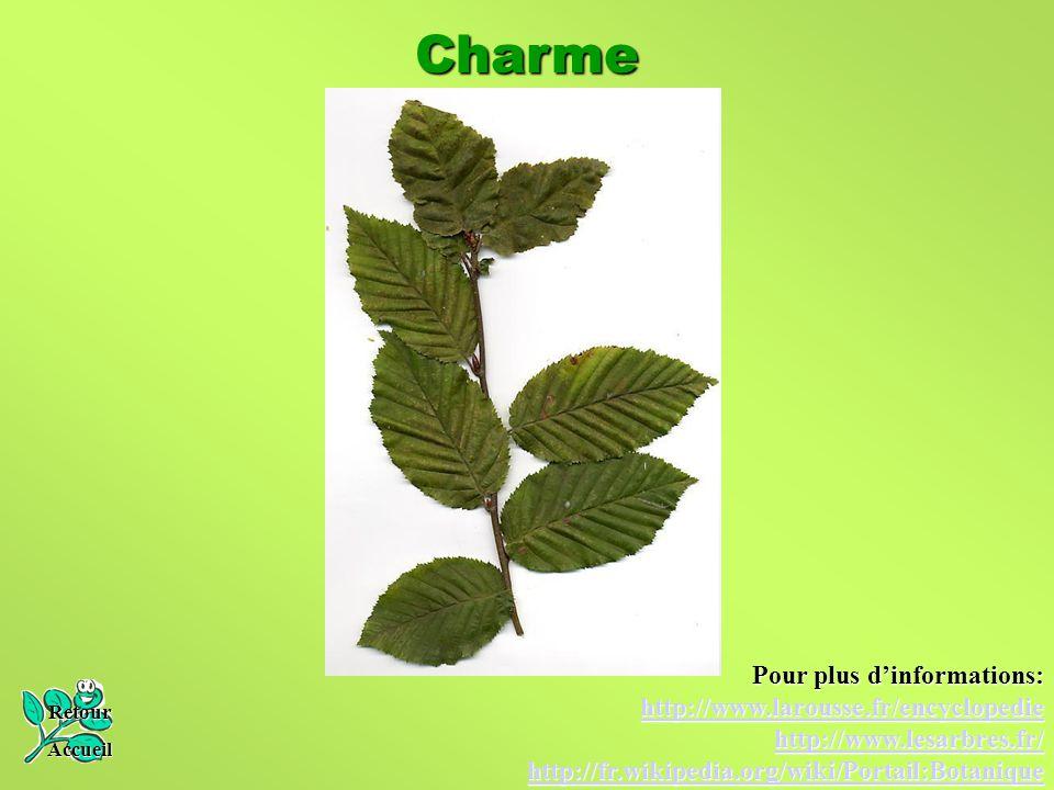 Charme Retour Accueil Pour plus d'informations: http://www.larousse.fr/encyclopedie http://www.lesarbres.fr/ http://fr.wikipedia.org/wiki/Portail:Bota