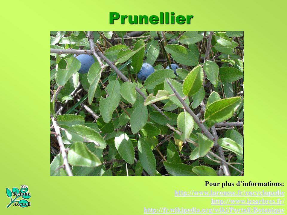 Prunellier Retour Accueil Pour plus d'informations: http://www.larousse.fr/encyclopedie http://www.lesarbres.fr/ http://fr.wikipedia.org/wiki/Portail:
