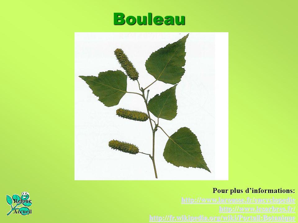Bouleau Retour Accueil Pour plus d'informations: http://www.larousse.fr/encyclopedie http://www.lesarbres.fr/ http://fr.wikipedia.org/wiki/Portail:Bot