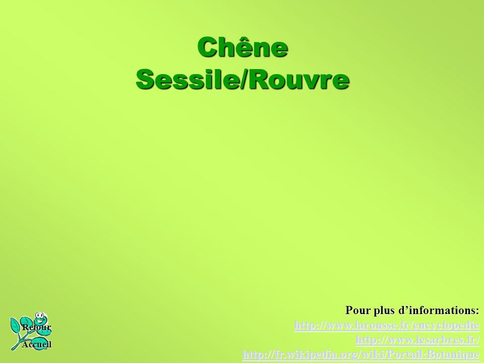 Chêne Sessile/Rouvre Retour Accueil Pour plus d'informations: http://www.larousse.fr/encyclopedie http://www.lesarbres.fr/ http://fr.wikipedia.org/wik