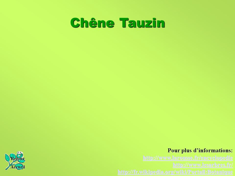 Chêne Tauzin Retour Accueil Pour plus d'informations: http://www.larousse.fr/encyclopedie http://www.lesarbres.fr/ http://fr.wikipedia.org/wiki/Portai