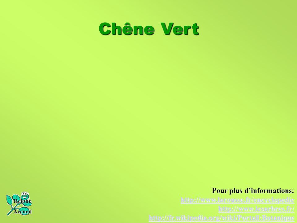 Chêne Vert Retour Accueil Pour plus d'informations: http://www.larousse.fr/encyclopedie http://www.lesarbres.fr/ http://fr.wikipedia.org/wiki/Portail: