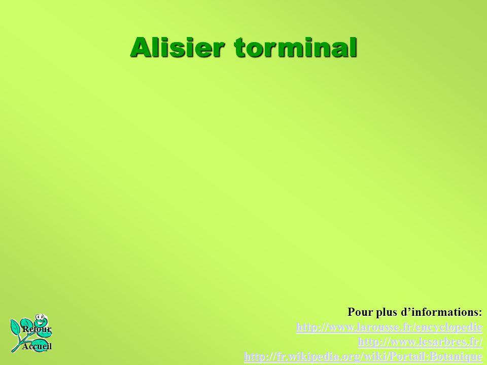Alisier torminal Retour Accueil Pour plus d'informations: http://www.larousse.fr/encyclopedie http://www.lesarbres.fr/ http://fr.wikipedia.org/wiki/Po