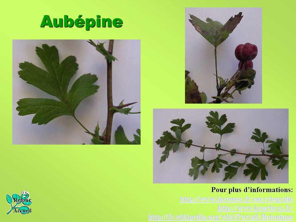 Aubépine Retour Accueil Pour plus d'informations: http://www.larousse.fr/encyclopedie http://www.lesarbres.fr/ http://fr.wikipedia.org/wiki/Portail:Bo