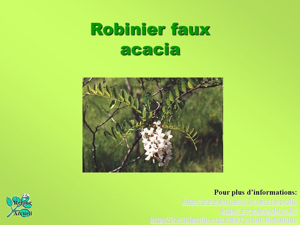 Robinier faux acacia Retour Accueil Pour plus d'informations: http://www.larousse.fr/encyclopedie http://www.lesarbres.fr/ http://fr.wikipedia.org/wik