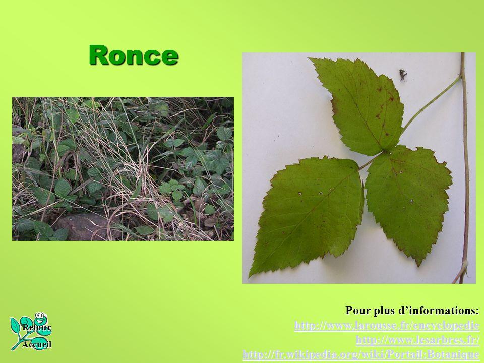 Ronce Retour Accueil Pour plus d'informations: http://www.larousse.fr/encyclopedie http://www.lesarbres.fr/ http://fr.wikipedia.org/wiki/Portail:Botan