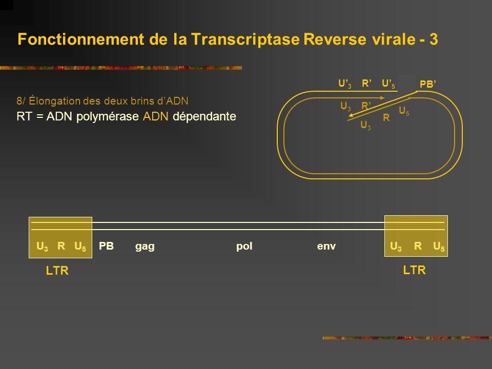 Fonctionnement de la Transcriptase Reverse virale - 3 8/ Élongation des deux brins d'ADN RT = ADN polymérase ADN dépendante U' 3 R' U' 5 U 3 R' PB' R