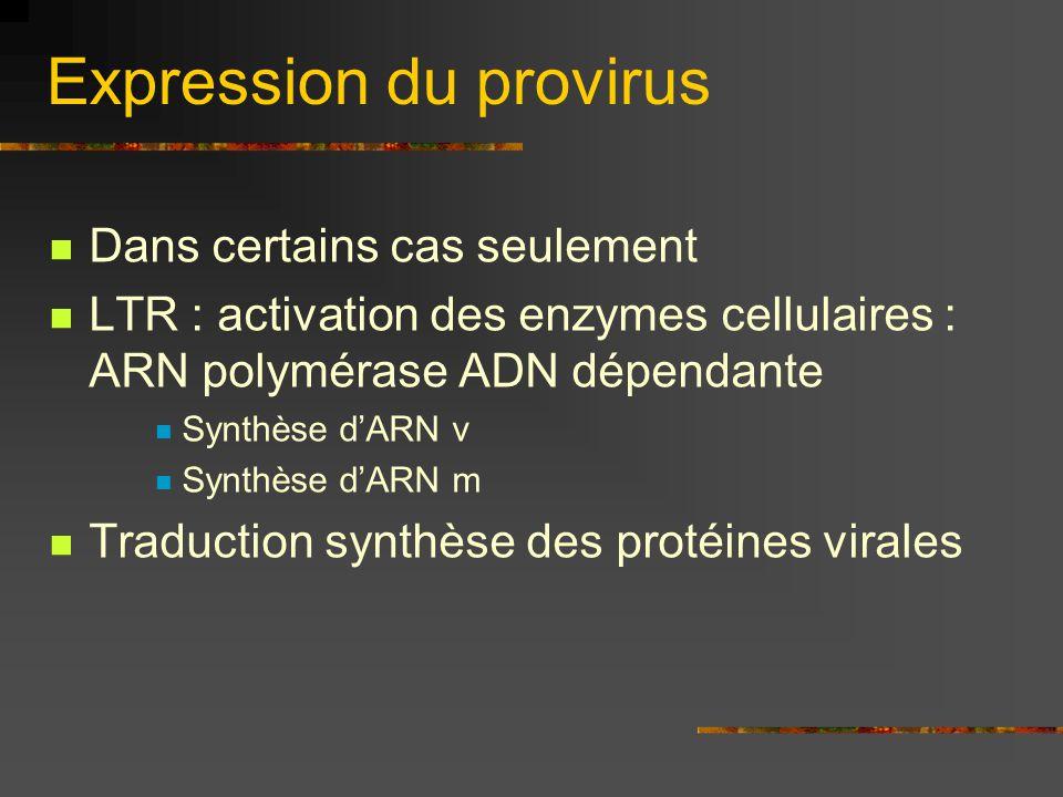Expression du provirus Dans certains cas seulement LTR : activation des enzymes cellulaires : ARN polymérase ADN dépendante Synthèse d'ARN v Synthèse