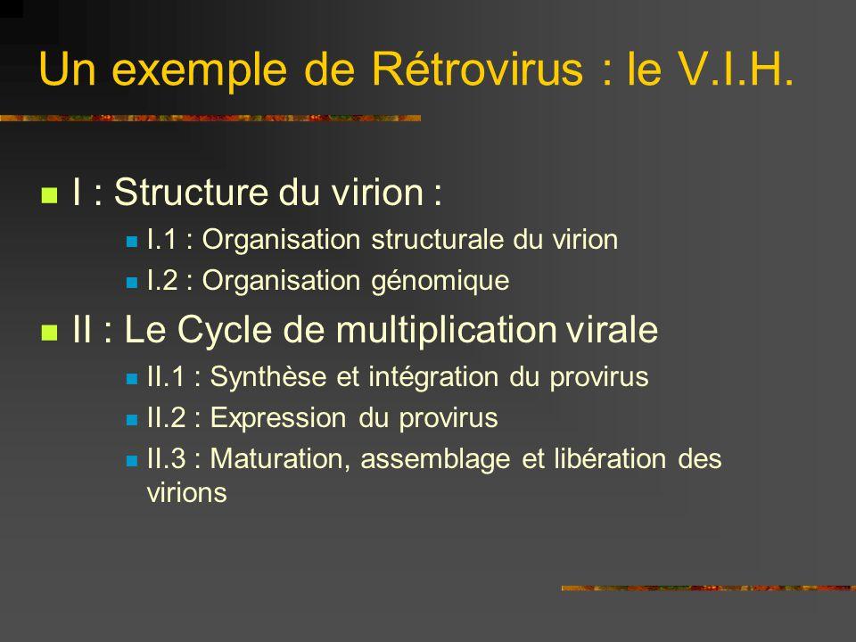 Un exemple de Rétrovirus : le V.I.H. I : Structure du virion : I.1 : Organisation structurale du virion I.2 : Organisation génomique II : Le Cycle de