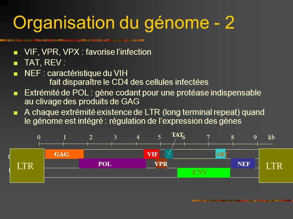 Organisation du génome - 2 VIF, VPR, VPX : favorise l'infection TAT, REV : NEF : caractéristique du VIH fait disparaître le CD4 des cellules infectées