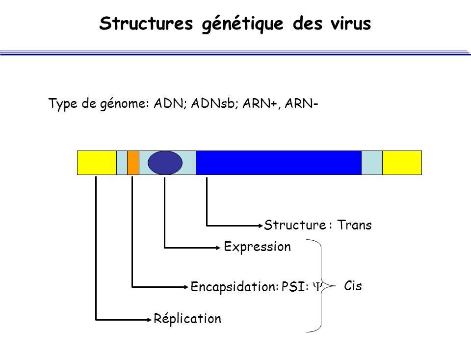 Structures génétique des virus Type de génome: ADN; ADNsb; ARN+, ARN- Encapsidation: PSI:  Expression Réplication Structure : Cis Trans