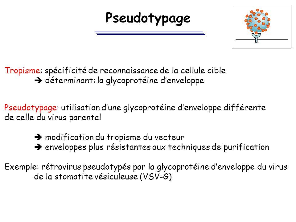 Pseudotypage Tropisme: spécificité de reconnaissance de la cellule cible  déterminant: la glycoprotéine d'enveloppe Pseudotypage: utilisation d'une g
