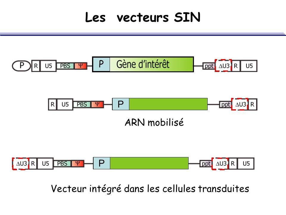 Les vecteurs SIN P P ARN mobilisé P Vecteur intégré dans les cellules transduites