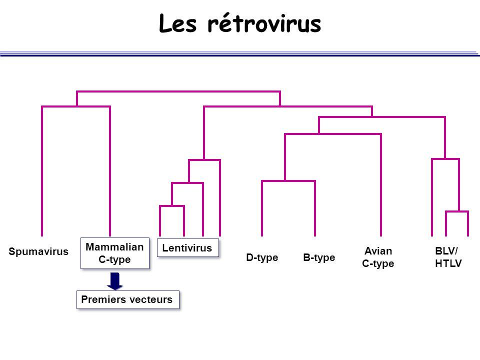 Les rétrovirus Spumavirus Mammalian C-type Mammalian C-type Lentivirus D-typeB-type Avian C-type BLV/ HTLV Premiers vecteurs