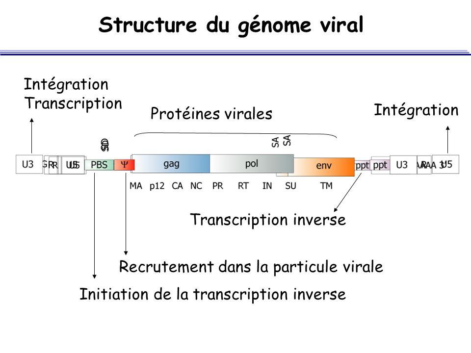 Structure du génome viral Recrutement dans la particule virale Initiation de la transcription inverse Protéines virales Transcription inverse Intégrat