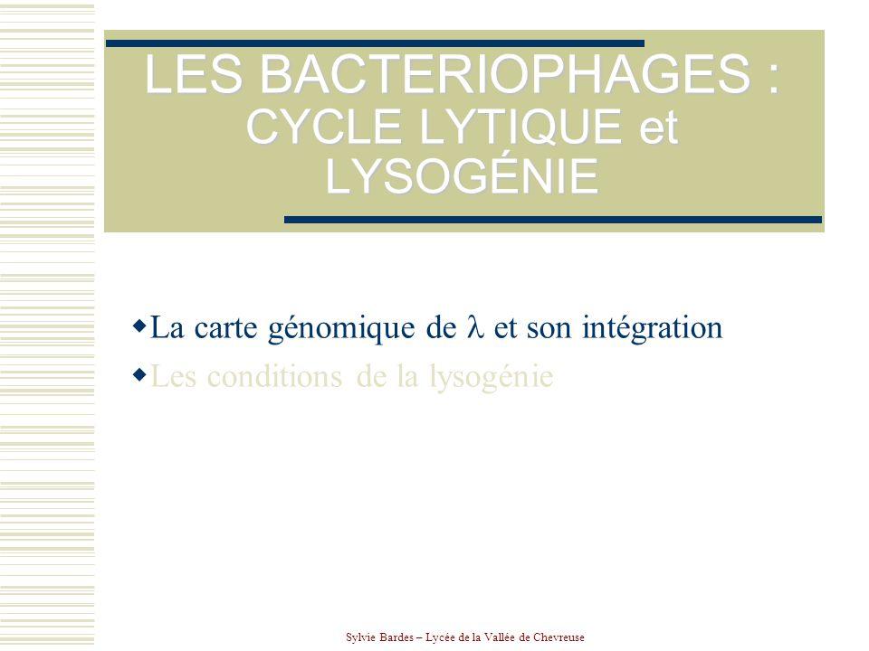 Sylvie Bardes – Lycée de la Vallée de Chevreuse LES BACTERIOPHAGES : CYCLE LYTIQUE et LYSOGÉNIE  La carte génomique de  et son intégration  Les con