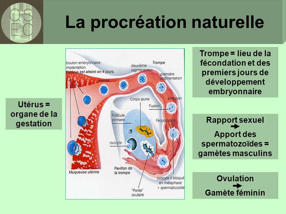 Trompe = lieu de la fécondation et des premiers jours de développement embryonnaire Utérus = organe de la gestation La procréation naturelle Rapport sexuel Apport des spermatozoïdes = gamètes masculins Ovulation Gamète féminin