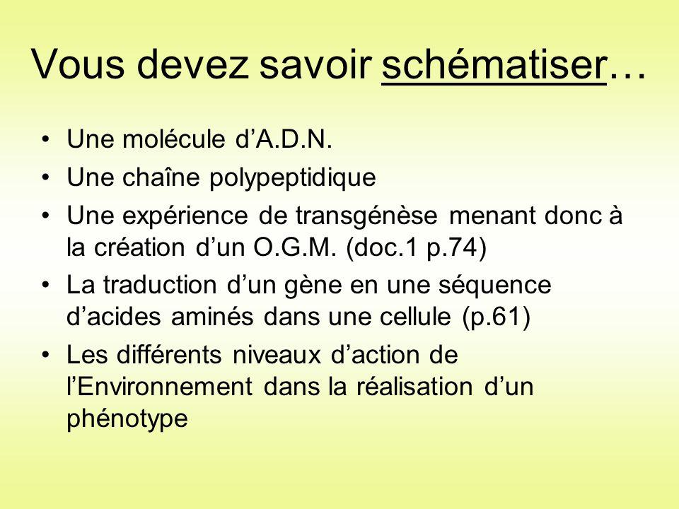 Vous devez savoir schématiser… Une molécule d'A.D.N. Une chaîne polypeptidique Une expérience de transgénèse menant donc à la création d'un O.G.M. (do