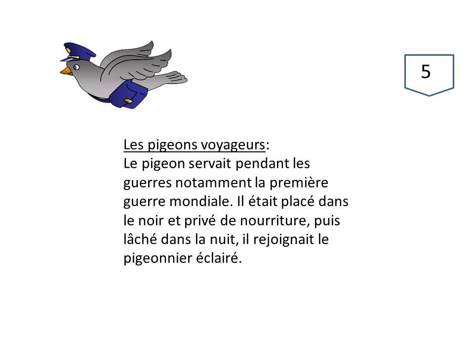 Les pigeons voyageurs: Le pigeon servait pendant les guerres notamment la première guerre mondiale. Il était placé dans le noir et privé de nourriture