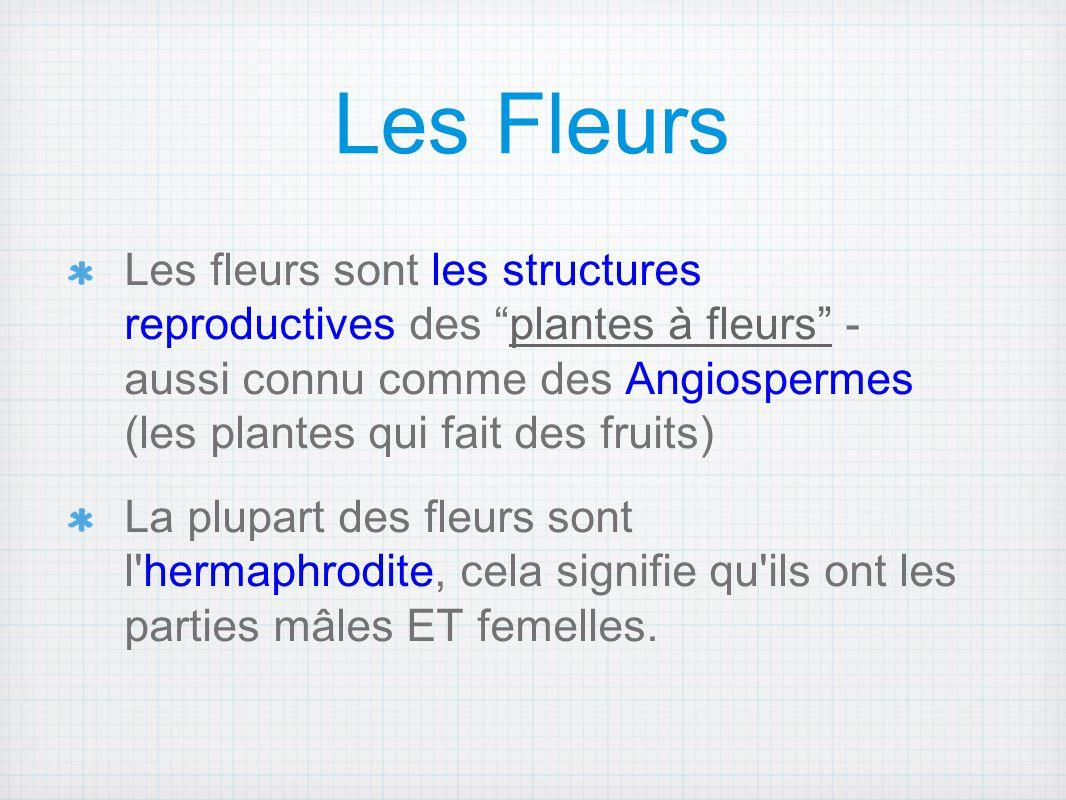 """Les Fleurs Les fleurs sont les structures reproductives des """"plantes à fleurs"""" - aussi connu comme des Angiospermes (les plantes qui fait des fruits)"""