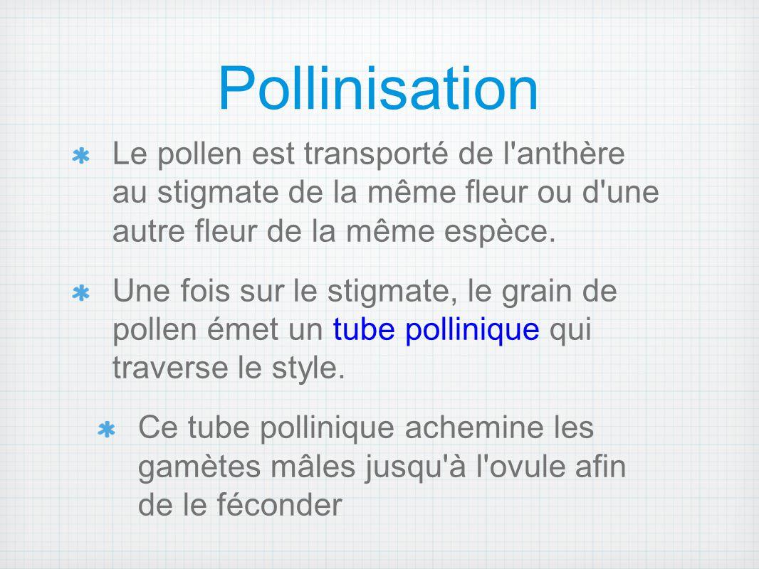 Pollinisation Le pollen est transporté de l'anthère au stigmate de la même fleur ou d'une autre fleur de la même espèce. Une fois sur le stigmate, le